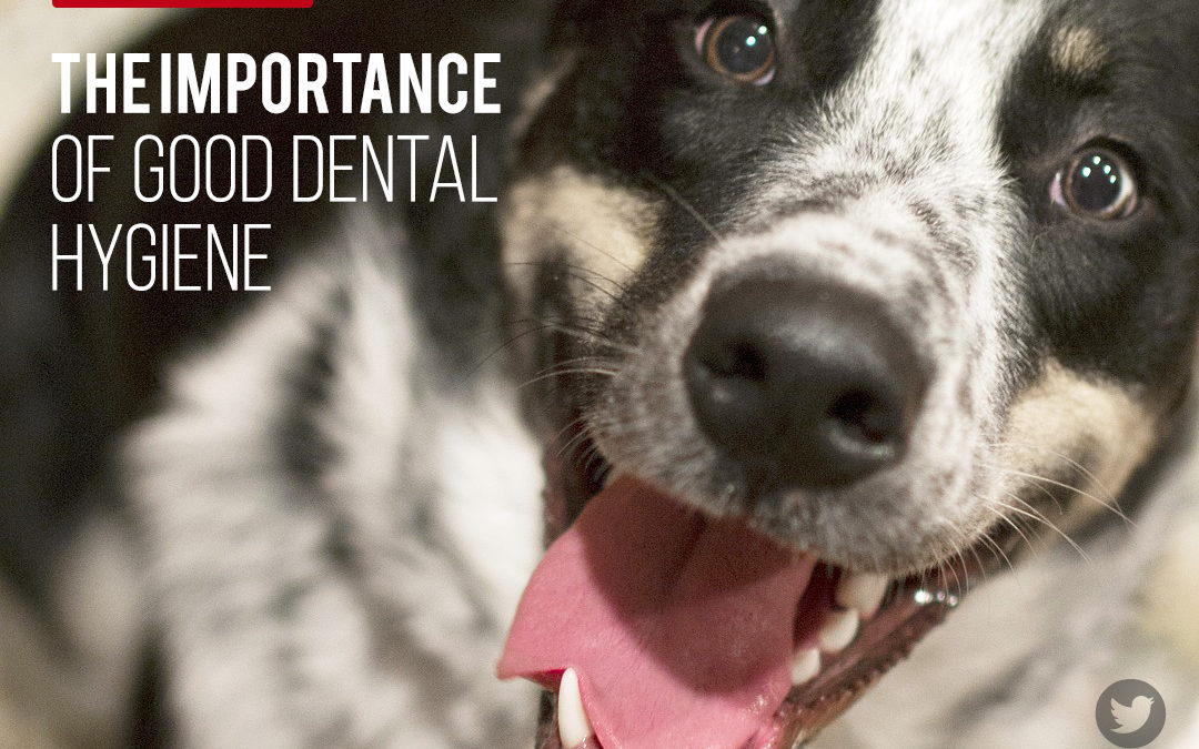 The Importance of Good Dental Hygiene