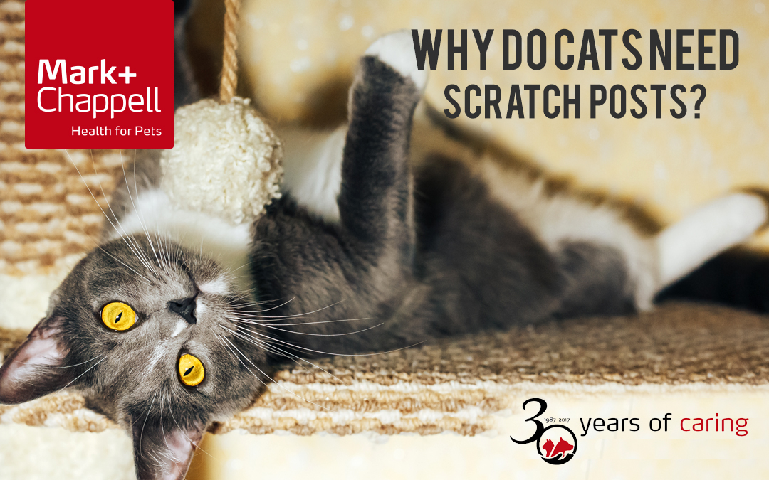 Why Do Cats Need Scratch Posts?