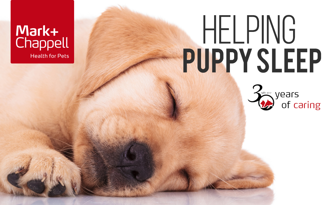 Helping Your Puppy Have a Good Night's Sleep!
