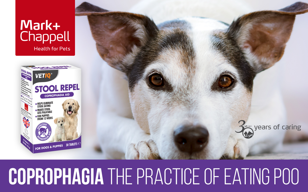 Coprophagia (the Practise of Eating Poo)