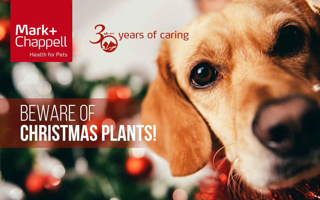 What You Should Know About Christmas Plants